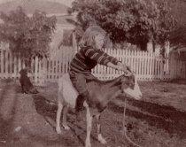 Image of 0000.00.0015 - Steve Whalton Riding Harry the Goat on Key West Lighthouse Grounds