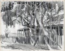 Image of Backyard Banyan