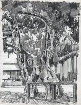 Image of Banyan Tree