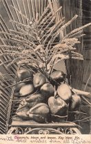 Image of Cocoanuts, Bloom and Leaves, Key West