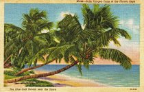 Image of Palms of the Florida Keys