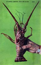 Image of Florida Spiny Lobster