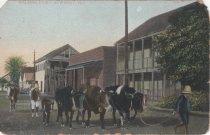 Image of Walking Dairy, Key West
