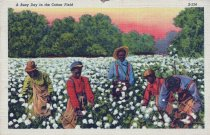 Image of Men and boys picking cotton
