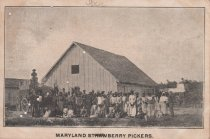 Image of Maryland Strawberry Pickers