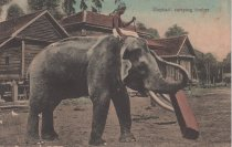 Image of Elephant carrying timber