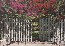 Image of 0000.01.0013 - Bougainvillea/Key West