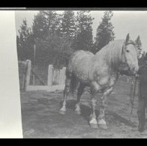 Image of 1950.50.12 - Photograph