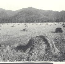 Image of 1981.53.2 - Photograph