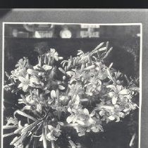 Image of 1981.53.37 - Photograph