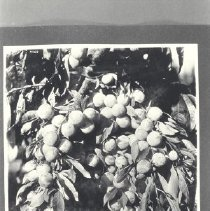 Image of 1981.53.6 - Photograph