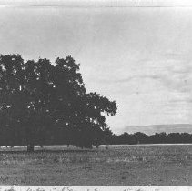 Image of 1989.14.8 - Photograph