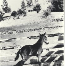 Image of 1992.37.45 - Photograph