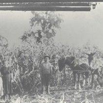 Image of 1993.54.12 - negative