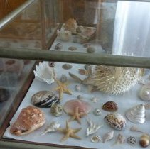 Image of Display case