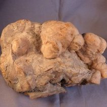 Image of Fungus