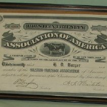 Image of Holstein Certificate