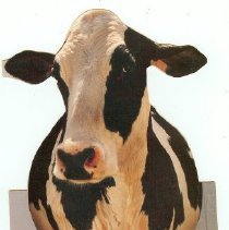 Image of Card, greeting - 1 holstein cow card with note inside