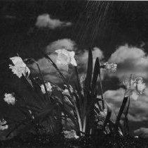 Image of 1985.15.13 - Print, Photographic