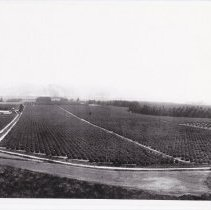 Image of Limoneira and Olivelands Ranches - 5-A-37.6