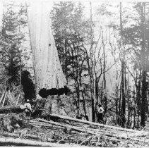 Image of Logging - 1973-294-1356-3