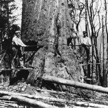 Image of Logging - 1973-294-1356-5