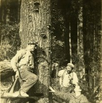 """Image of Mitchel Lewis in """"King Spruce"""""""