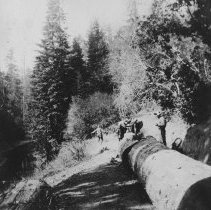 Image of Logging - 1994-01-08