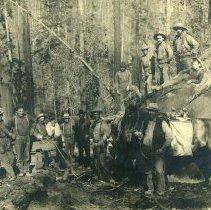 Image of Logging - 1995-001-364