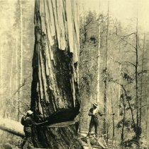 Image of Logging - 1995-001-532