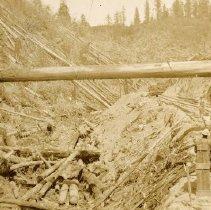 Image of Logging - 1995-001-552