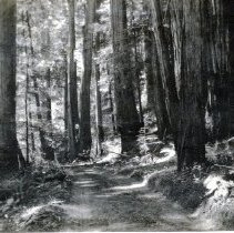 Image of Forests Roads - 1995-001-594