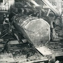 Image of Logging - 2007-03-1362-21