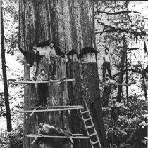 Image of Logging - 2007-03-1380-21