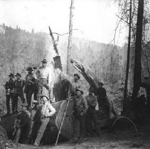Image of Logging - 2007-03-1463-36