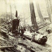 Image of Logging - 2007-03-1501-17