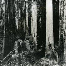 Image of Logging - 2007-03-772