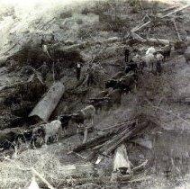 Image of Logging - 2007-26-72