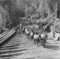 Image of Logging with Mules in Comptche