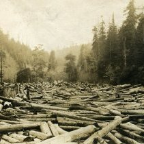 Image of Logging - 2007-03-1324-34