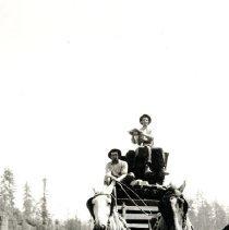 Image of Logging - 2007-03-1392-2