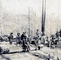 Image of Logging - 2007-03-1402-24
