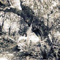 Image of Daisy MacCallum in hammock