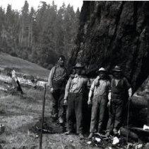 Image of Logging - 2007-03-1392-30