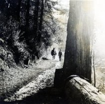 Image of Trail Between Logging Camps