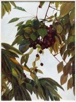 Image of Fay Hilker - Cherries