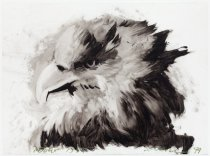 Image of Tony Scherman - untitled [eagle]