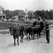 Image of Oxen Hauling Lumber - Oxen hauling lumber on Lebanon Hill, Mount Airy, with Gus Simmons home and Sid Towe home in background.  Two young men are sitting on the wagon, and a third is standing beside it.  Mount Airy Township, early 1900s.