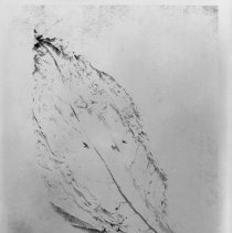 Image of Tobacco Leaf - Tobacco leaf.  Refer to SURRY COUNTY BICENTENNIAL BOOK page 118.