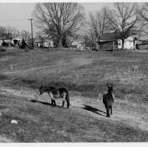 Image of Depot Street, Pilot Mountain - Houses along Depot Street, Pilot Mountain.  Pasture with two mules is in the foreground.